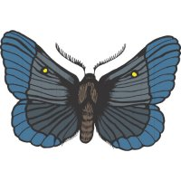 Butterfly Light Iron On Stickers (Heat Transfers) version 12
