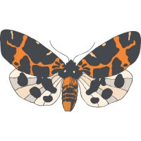 Butterfly Light Iron On Stickers (Heat Transfers) version 2