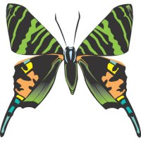 Butterfly Light Iron On Stickers (Heat Transfers) version 20