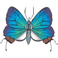 Butterfly Light Iron On Stickers (Heat Transfers) version 18