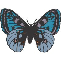 Butterfly Light Iron On Stickers (Heat Transfers) version 15